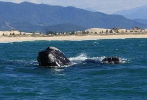 baleias eband lanchaarare