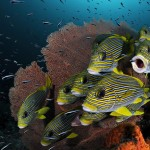 under-water-photography-2010-9-660x438