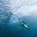 underwaterphotography20101