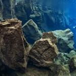 underwaterphotography20102
