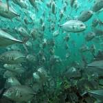 underwaterphotography20104