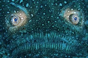 underwaterphotography20105