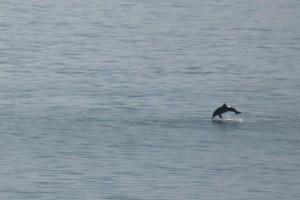 golfinhos01
