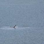 golfinhos02