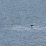golfinhos04