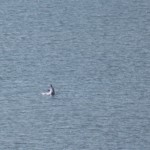 golfinhos05
