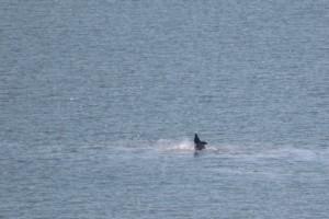 golfinhos07