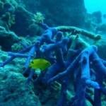 coral-australia-protetor-solar-20110831-size-320