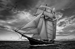 navio blog arare