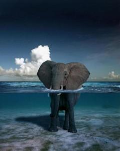 elefante03